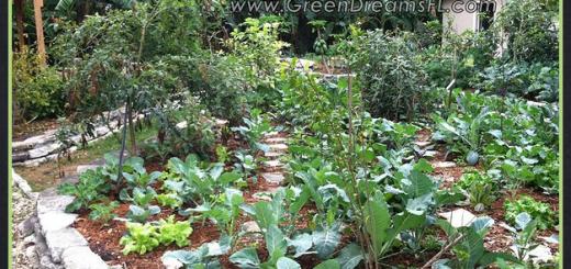 permaculture, greendreams, organic garden